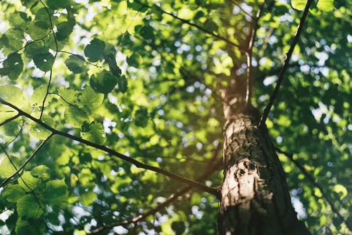 ビタミンDを体内でつくるためには、紫外線に当たることが必要不可欠です。ビタミンD生成に必要な目安としては、「夏は木陰で30分、冬は顔や手に1時間程度日光に当たる」といわれています。日焼け止めやガラス越しだとあまり意味はありません。おすすめなのは、朝の日光浴です。朝の紫外線は力がよわいため、朝洗濯物を干しながら日光浴したり、朝の散歩をしたりしてみましょう。しかし、紫外線に当たりすぎるとシミが出来やすくなったり、皮膚ガンの原因になることもあり、毎日こんなに日に当たるのは怖い…という方はサプリメントに頼ってみましょう。