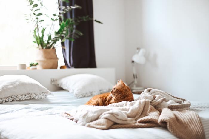 よく眠り、よく生きる。【睡眠力】を上げる習慣&グッズ特集