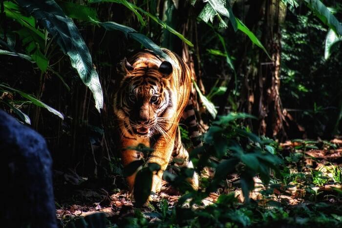 『山月記』は、高校教科書への掲載回数が最多を誇る短編小説。詩人になる夢を捨て切れず、悩み苦しんだ挙句に虎になってしまった主人公の胸の内が綴られています。