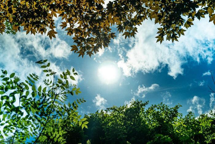 強い光を浴びると眠気を覚ますことができます。在宅やオフィスワークの方は、日光に当たることでリフレッシュもできますね。外に出て直接浴びるのが理想ですが、難しい場合は窓辺に行くのも◎