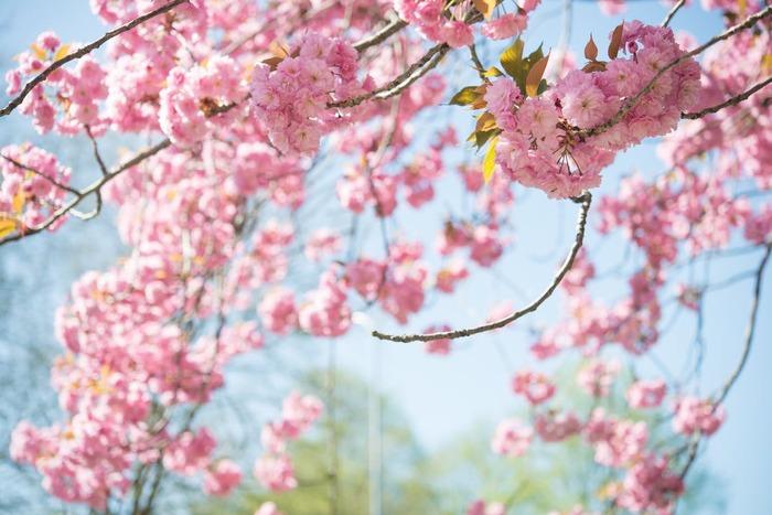 四季を喜び食を楽しむ。「節句」の意味と「五節句」におすすめのレシピ