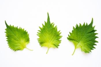 レシピでよく見かける「シソ」と「大葉」。  実はともに同じで、「シソ」はシソ科シソ属の植物のことを指し、食用とされる青ジソ、赤ジソを表すことが多い呼び名です。「大葉」はおもに青ジソの葉を指し、食用の材料として表すときに使われる呼び名です。  また、地域によっても、「シソ」と「大葉」というどちらの言葉をよく使うかは異なります。