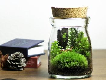 """瓶の中に寄せ植えされた苔を楽しめる""""苔テラリウム""""もオススメです。1~2週間に一度の水やりでOKとのことなので、忙しい方でも手軽に育てることができます。瓶の中には小さな動物の人形も!とても癒されます*"""
