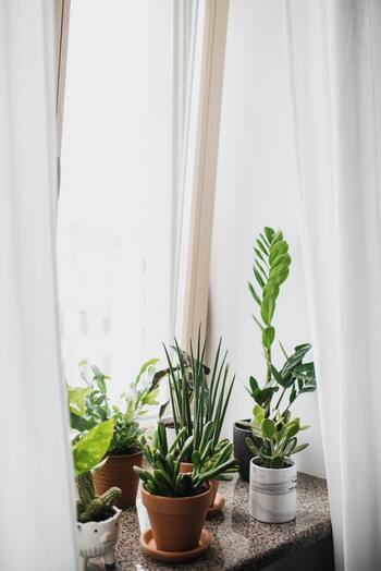 育てるのは苦手でも、緑の癒しは暮らしに取り入れられる!おすすめ「グリーンインテリア」