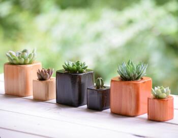 こちらの作品は、シンプルなウッドキューブに植えられていてどんなお部屋にも馴染みそうです*プレゼントにも良いですね♪