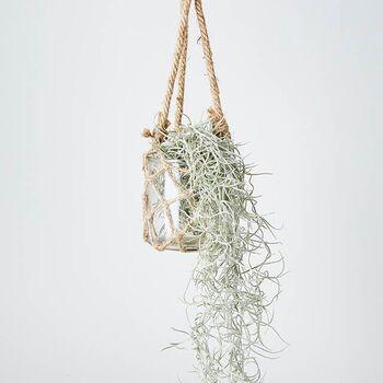 ガラスベースに麻紐を組み合わせたハンギングプランターは、エアープランツなど野性的な味わいある植物の器におすすめです。