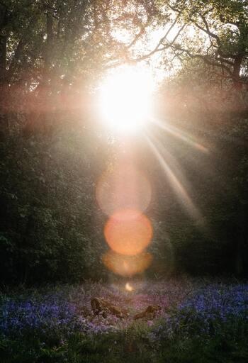 朝の目覚めが悪い方や体の凝り固まりを感じている人は、朝ヨガでじんわりと体と筋肉をほぐしていくことで、プチ不調の改善が期待できます。またヨガを取り入れることによって、気分や精神が落ち着き、安定したマインドで一日の始まりを迎えることができるように。