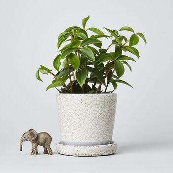 棚の上や小さなスペースに観葉植物を置きたい時、小ぶりなプランターがあると嬉しい。貫入模様が味わいがあるテラコッタ素材のソーサー付ポット。ナチュラルインテリアによく似合う温もりある表情が魅力です。