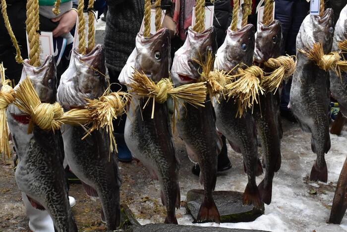 沿岸に漁港が連なっているように、「にほか市」は、漁業が盛んな地。特産のハタハタや真タラ、桜マスやヒラメ、黒鮑や岩牡蠣等など、様々な魚介が、季節それぞれに水揚げされています。また、塩越港・金浦湊・三森湊・平沢湊は、江戸期から明治期にかけて、北前船寄港地として賑わった港町。市内には、数多くの北前船の文化財が点在し、かつての活気ある風情、雰囲気を今に伝えています。  【画像は、にほか市金浦町の「掛魚まつり(かけよまつり)」。寒鱈漁期に合わせ、例年立春の日に開催され、三百年もの歴史がある。当祭では、金浦漁港に揚がった重さ10kgもの寒鱈を二人一組で担いで町内を練り歩いた後、金浦神社に奉納される。  魚介が丸々と育ち、肥沃な土地となるのは、万年雪を頂く鳥海山の伏流水のお陰である。雪解け水は、溶岩層や山麓のブナの原生林に浸透し、その滋養を蓄えながら、幾年月をかけて伏流水となる。やがて地表に湧き出て、川となり、地を潤し、肥沃な土壌を育てている。川の水は海へと注ぎ、一部の伏流水は、直接砂浜や海中から湧き出て、プランクトンを発生させて、豊かな海洋資源を生み出している。】