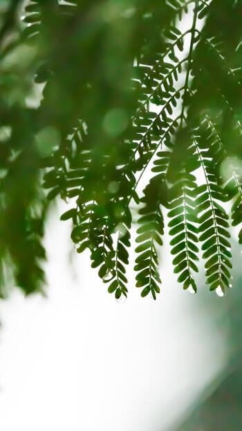 梅雨時期は湿気が多くてジメジメしているうえに、気温も上がっているので汗をかきやすくなっています。 「湿気が多いから…」と保湿を控え目にしてしまいがちですが、実は湿気の多さに関係なく肌は乾燥してしまうことが多いといいます。肌が乾燥すると皮脂が分泌されやすくなるため、それが原因でヨレやメイク崩れが起きてしまうと考えられます。
