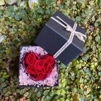 ボックスを開けると赤いバラ花がハート型に♪箱を開けたときの驚きは、宝箱のようにドキドキワクワクします。嬉しい気持ちと一緒に大切にしてもらえそうです。