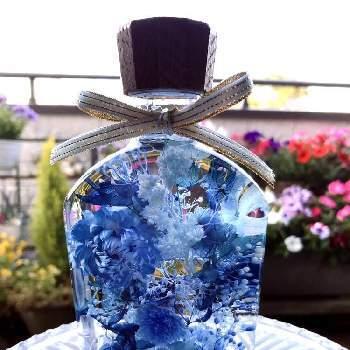 ハーバリウムは場所も取らず、どこにでも置けるのが利点です。鮮やかな青が光に照らされてキラキラ光ります。お2人の新婚生活もキラキラと輝いていてほしいですね。
