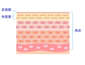 お風呂の湯に肌をつけると・・・顔・体の肌の表面にあたる部分、「角質層(角質)」が水分を含んで膨らみます。この角質、普段は隙間なく整列しているのですが、水分を含むことで「隙間」が生まれてしまい、そこから、水分が蒸発したり、お肌の保湿成分が流れ出したりしてしまうのです。  0.02mmと言われる角質層ですが、肌のバリア機能を担っており、美肌を目指す上でも切っても切れない関係です。