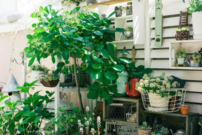 屋内外が緩やかに繋がるバルコニーでは、鉢植えをディスプレイのように配置するのも素敵。広さのないベランダやバルコニーでも、壁面を上手に使えばこんなに華やかにしあがります。ほかにも小さめの鉢植え集めたり、スリムなプランターを並べたりすると青々としたグリーンの美しさを楽しめます。