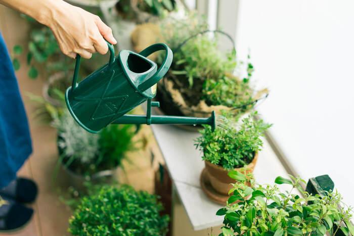また風通しやその強さもチェックポイント。植物が成長するために欠かせないのが風通し。悪いと蒸れてしまい、植物に病気や害虫が発生してしまうことも。コンテナは、なるべく高い位置に置くなどの工夫が必要です。