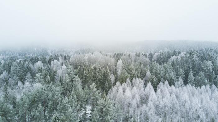 村上春樹の作品を読まれたことのない方でも、一度は耳にしたことがあるはず。言わずと知れた世界的な名作『ノルウェイの森』は、映画化もされて話題を呼びました。