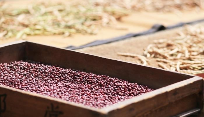 """一方、秋田の""""諸越""""は、小豆を挽いた""""小豆粉""""と砂)が主原料で、香ばしく、上品な味わいが特徴です。 県内のスーパーやコンビニの菓子棚には、種々様々な商品が常時陳列されている程に、""""諸越""""は、日常的に頂くもので、地元に根付いた郷土菓子です。 【農家の小豆干し。小豆は収穫後、鞘のまま天日干しし、乾燥後木槌で丁寧に叩き、鞘から豆を取り出す。】"""