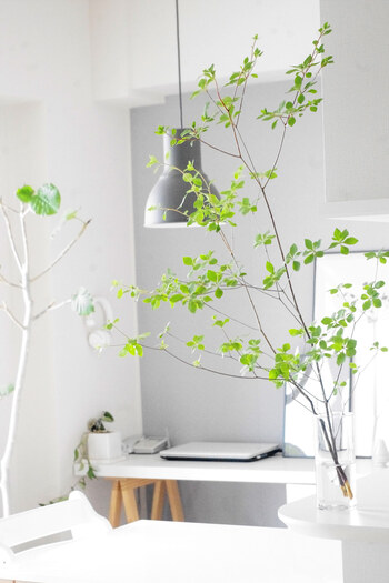 透明感のあるモノは、清々しさやひんやりとしたイメージを与えますよね。こちらのお宅のように、ガラスのフラワーベースにグリーンを挿すだけでも涼しげな夏らしさを感じさせます。