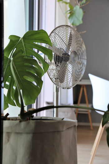 清涼感を住まいにお招き♪手軽にできる「夏の模様替え」の3つのヒント