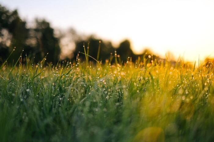 To an optimist every weed is a flower; to a pessimist every flower is a weed. 直訳すると「楽しい人には草も花、いじけた人には花も草」という意味です。  同じ景色も、気持ち次第で色が変わって見えることがありますよね。世界のすべてを前向きに楽しめるよう、いつもご機嫌でいたいものです。今のあなたはどんな気分?