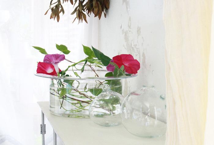 夏の花と言えば朝顔。鉢植えが定番の育て方ですが、こんな飾り方もあり。平たいフラワーベースにたっぷりと水をはり、花を浮かべるように挿しています。たゆたう水に夏の花が映えて、ドラマティックなディスプレイにしあがっています。