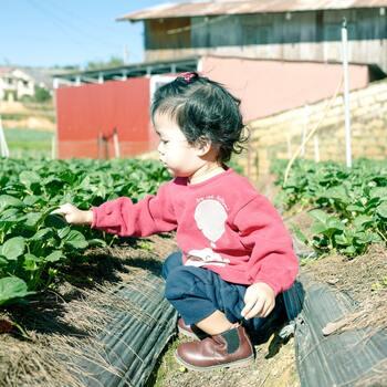 ステイホームにより家庭菜園を始めたおうちが多いそうです。毎日少しずつ大きくなっていく野菜を観察し夏からでも遅くなく早めに収穫できる野菜をご紹介します。いちばん手軽でおすすめなのが「豆苗」。切ったあと捨てずに水につけておくと数日で新しい葉が生えてきます。「ミニトマト」も丈夫で比較的成長の速い野菜なので、初心者にも育てやすい。苗植えから始めて涼しい場所で育てましょう。狭いスペースでも育てられるのが「ラディッシュ」。こちらも初心者向けの野菜です。間引きしたスプラウトもおいしく食べられます。