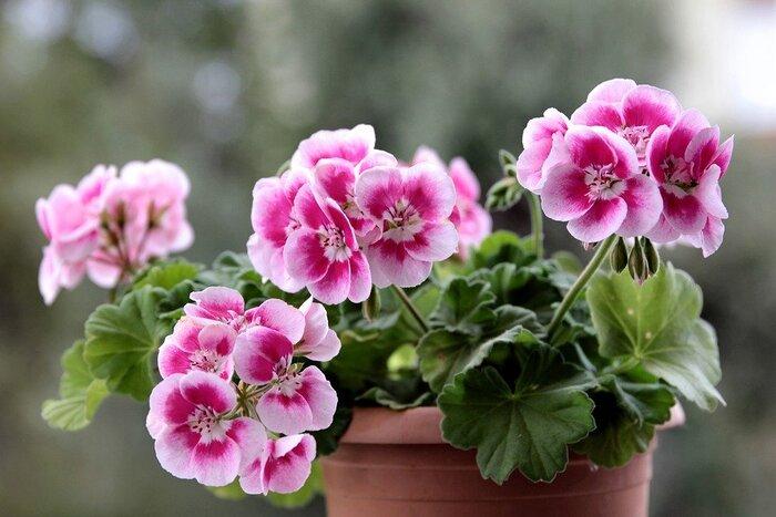 徒歩10分圏内に自然を感じる場所がないというときは、ご近所さんの鉢植えを眺めてみてもいいですね。思いがけず、いろいろな花に出会えるものです。お手入れされた色とりどりの花たちを見たら、自分のお庭やベランダにも植物を迎えてみたくなりそうです。