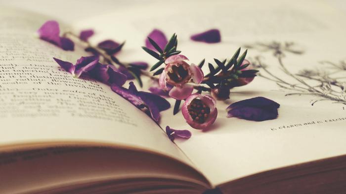 「純文学」を改めて読む~vol.3~【生と死について考える物語】