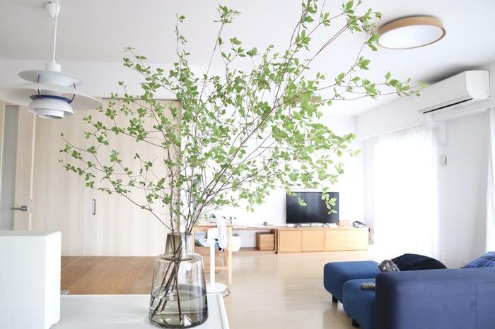 大ぶりなドウダンツツジは、まるでお部屋の中に森ができたような、爽やかな空気をもたらしてくれます。花瓶もガラス素材を選んで、さらに涼しげに!