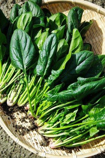 ほうれん草は、緑黄色野菜のなかでも特に栄養価が高いことで知られています。β-カロテンやビタミンCだけでなく、牛レバーに匹敵するほどの鉄分を含んでいるのが特徴です。 ヨーロッパでは「胃腸のほうき」と呼ばれており、整腸作用や便秘解消に効果があるともいわれています。  また、捨てがちなピンクの部分は、捨てるのはもったいないこと。ポリフェノールや骨を形成するのに必要とされるマンガンが含まれているので、捨てずに美味しく食べましょう。