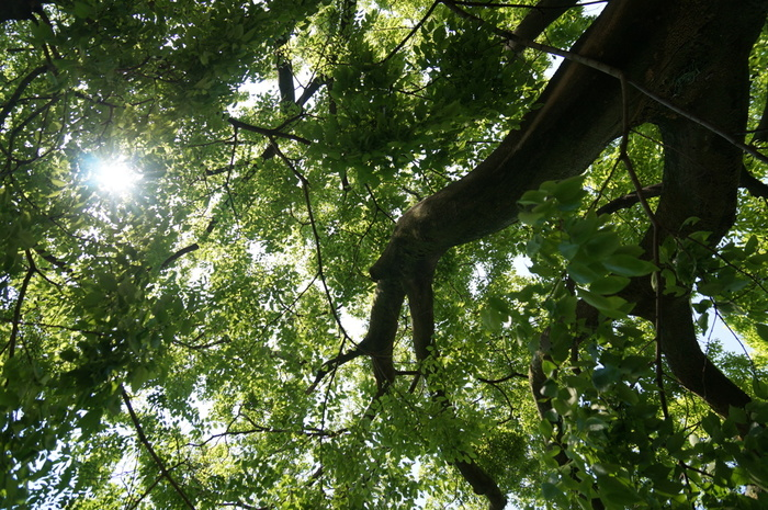 長居公園には、全国から訪れた人々によって植樹された約8600本の樹木が生い茂る「郷土の森」があります。長居公園の郷土の森では、大都会である大阪市街地に居ながら、気軽に森林浴を楽しむことができます。