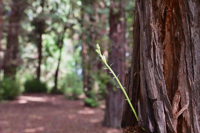 森林浴をしながら樹々をじっくりと観察してみましょう。大きく成長し、表皮がはがれかけている老木の間から若木の新芽が出ている様子など、ここでは森の生命の営みを観察することができます。
