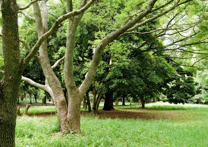 大泉緑地は、巨大な滑り台、バーベキュー広場などがある都市公園で市民の憩いの場となっている地です。広大な敷地に約200種類32万本もの樹木が植樹されており、恰好の森林浴スポットとなっています。