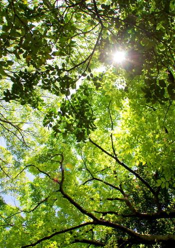 豊かな森が生い茂る大泉緑地は、「大阪みどりの百選」にも選定されています。森林浴をしながら、空を見上げてみましょう。樹々の間から射し込む木漏れ日は爽やかで、思わず深呼吸をしたくなるほどの気持ち良さです。