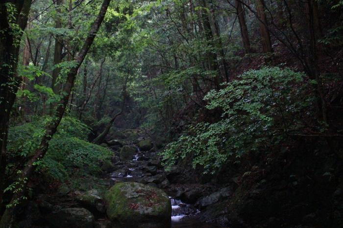 金剛生駒紀泉国定公園の一部となっている犬鳴山は、犬鳴山渓谷に流れ込む、標高558メートルの燈明ヶ岳などの山々の総称です。