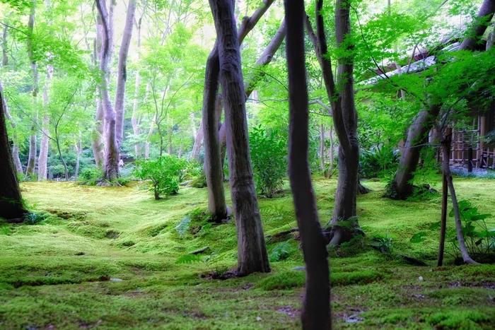 """森林浴といえば、「リラックス」「癒し」「マイナスイオン」などを想い描く方も多いのではないでしょうか。これらは、一般的に""""森林浴効果""""と言われています。森林浴効果の秘密とは、森林の樹木が発散する「フィトンチッド」という物質によるものです。フィトンチッドは、抗菌、防虫、消臭など様々な効果が期待されており、フィトンチッドを吸い込むことで、私たちの心身をリラックスさせてくれます。"""