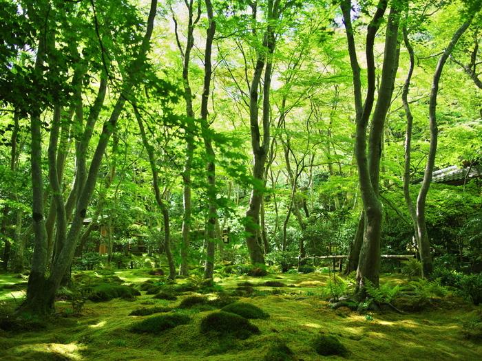 思わず深呼吸したくなる。美しい森の緑に魅せられて…「京都府」森林浴スポット
