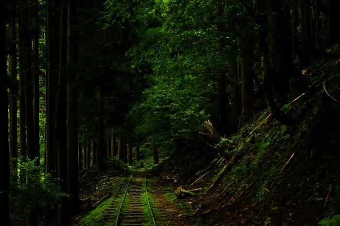 芦生の森に一歩足を踏み入れると、大勢の人々で賑わう京都市内から車で約1時間30分程度の距離とは思えない程、豊かな森が生い茂っています。森の中は、日中でも薄暗く、この森が太古から生命の営みを続けていることを静かに物語っています。