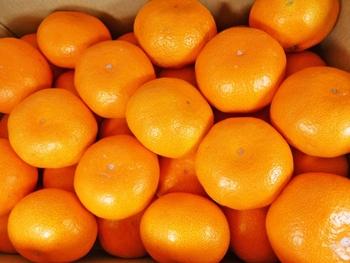 みかん・グレープフルーツなどの柑橘は、王道に比べると香り、酸味の強さは劣りますが、素材の味を邪魔せずまろやかな味になります。