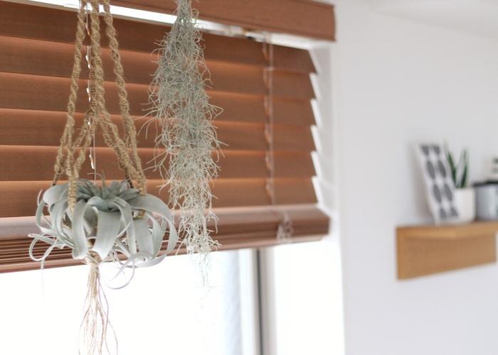 お手入れ簡単なエアプランツは、マクラメ編みのハンギングバスケットにぴったりです。万が一落としても安心なのも良い所。