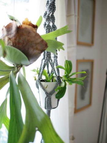 熱帯で樹木に付いて成長する蘭は、ハンギングバスケットに入れると違った雰囲気を楽しめます。いつも見ている植物も新鮮に感じられます。