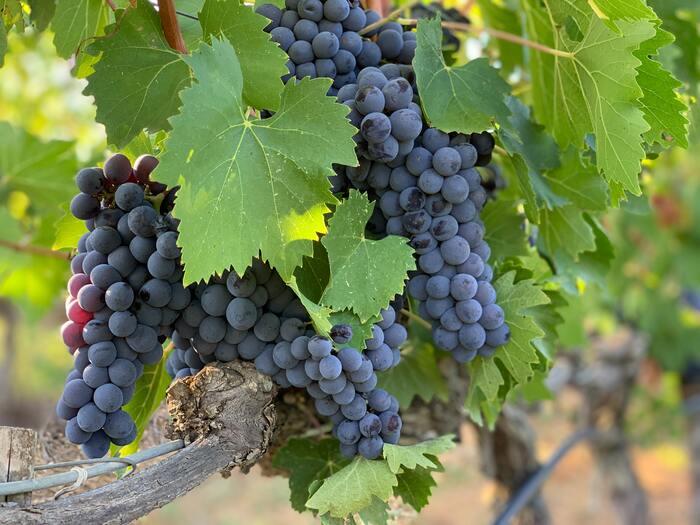 『ワインの手引き~イタリア編~』歴史と伝統の味をカジュアルに楽しもう