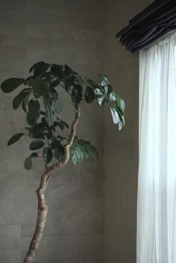 室内の観葉植物に溜まりやすいホコリ。水やりや日光浴には気を使っても、ホコリは見落としてしまいがちですが、葉っぱで呼吸する事もある植物はホコリが詰まると上手に光合成できなくなってしまうこともあるんです。葉水をしたり、その後葉っぱを拭くことで、ホコリを取り除くことが出来るのも嬉しいポイントですね。