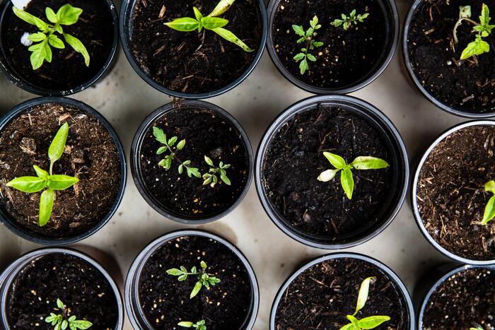 とは言え、水やりも日光浴も十分なはずなのに、元気がない...なんて経験されたことありませんか?もしかするとそれは、土からの水分だけでは植物が十分に潤っていないのかもしれません。多くの植物は、葉っぱからも空気中の水分を吸収することができます。どうしても乾燥しがちの室内、そこで「葉水」が活躍してくれるんです。