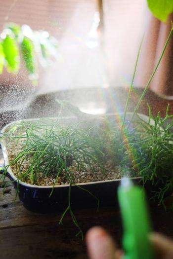 「葉水」とは文字通り、葉っぱに水を直接吹きかける方法。観葉植物の様に室内では、霧吹きで葉っぱにお水をあげることで、植物に潤いを与えてあげます。霧吹きは出来るだけ細かな霧が出るタイプがおすすめ。葉っぱに水滴が溜まるほどに濡らすのではなく、湿らすイメージで十分です。