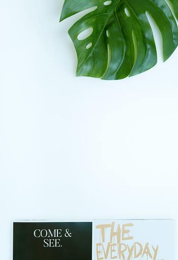 葉水をあげることで、瑞々しい綺麗な緑を保つ事ができます。植物自体は元気そうでも、葉の色が薄くなってしまった時などは、日光と同時に葉水での水分補給をプラスしてあげると良いかもしれません。