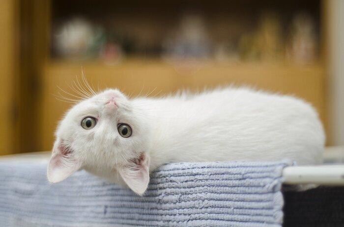 また、ペットのいるご家庭、特に猫を買われている場合は注意が必要です。猫は、ハッカ油やアロマオイルなど「精油」が原因で中毒を起こしてしまうことがあります。大切な家族の命に関わる問題です。猫がいる部屋では使用しない、よく換気をするなど、猫が精油に触れないよう工夫しましょう。