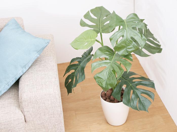 自然豊かなハワイの雰囲気を少しでもお家のなかで感じたいなら、観葉植物を置くのも◎モンステラは、ハワイアンキルトにもよく登場する植物なので、お部屋のなかにひとつ飾るだけでもハワイらしさを感じられるはずです。