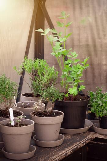 ハーブでナチュラルに虫除けしましょ。おすすめハーブ7種&育て方のコツ
