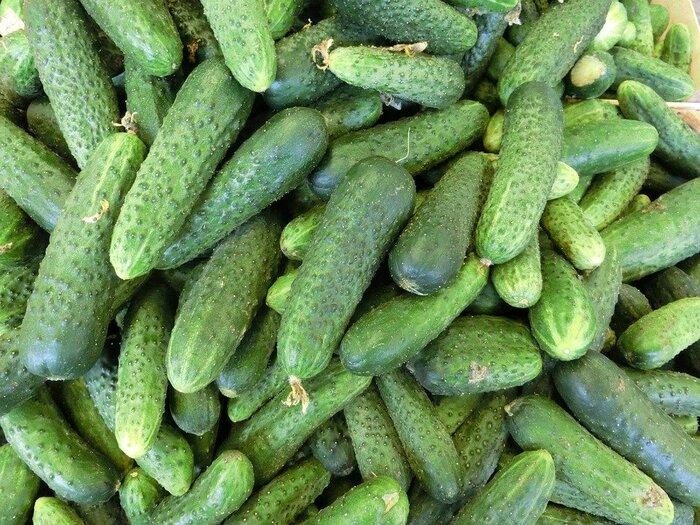 体にこもった余分な熱を収め、尿の出をよくし余分な水分を排泄します。胃腸を冷やす働きがあるので漬物や炒め物などショウガやネギ、ニンニクなどと合わせて食べるのがよいでしょう。